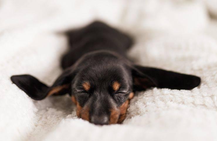 benefici miele cani