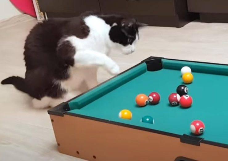 gattino asso biliardo