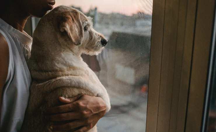 cane allevia depressione