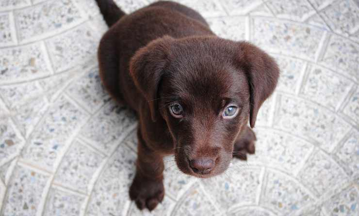 cane fegato benefici