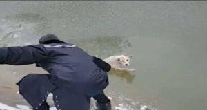 Catena umana per salvare il cane nel lago ghiacciato (Screen video)