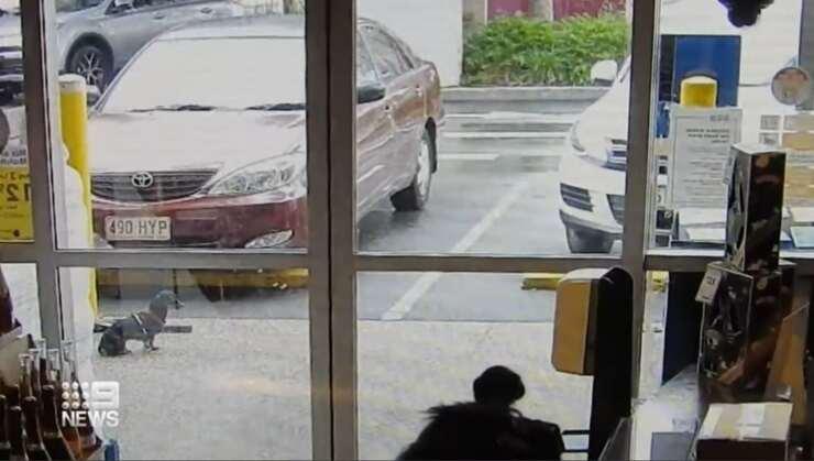 CoCo il bassotto rapito fuori dal supermercato