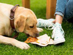 cane mangia panino con salumi