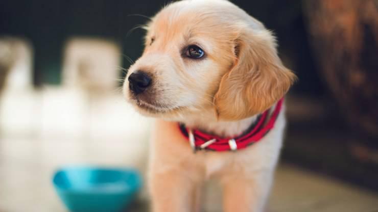 cane può mangiare fegato