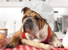cane prepara cibo