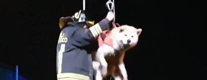 Cade in acqua, cane salvato dai vigili