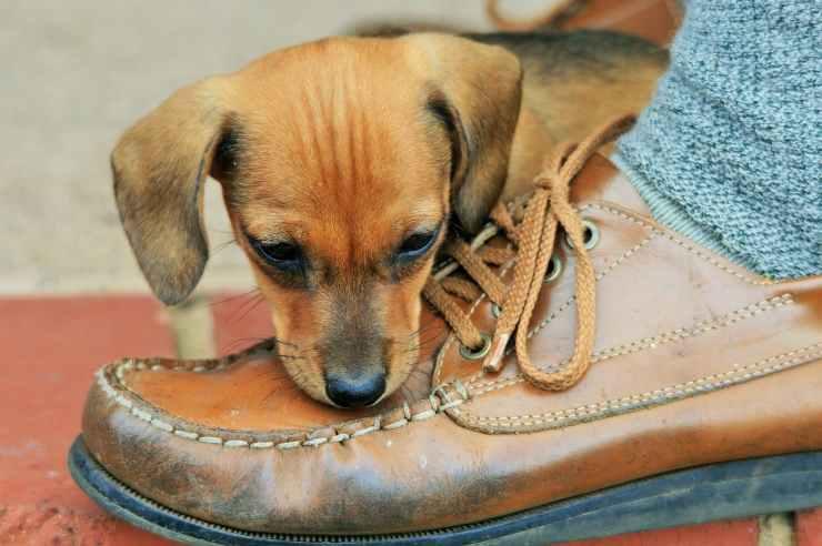 cane morde piedi quando camminiamo