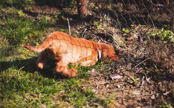 cane scava e sotterra cose