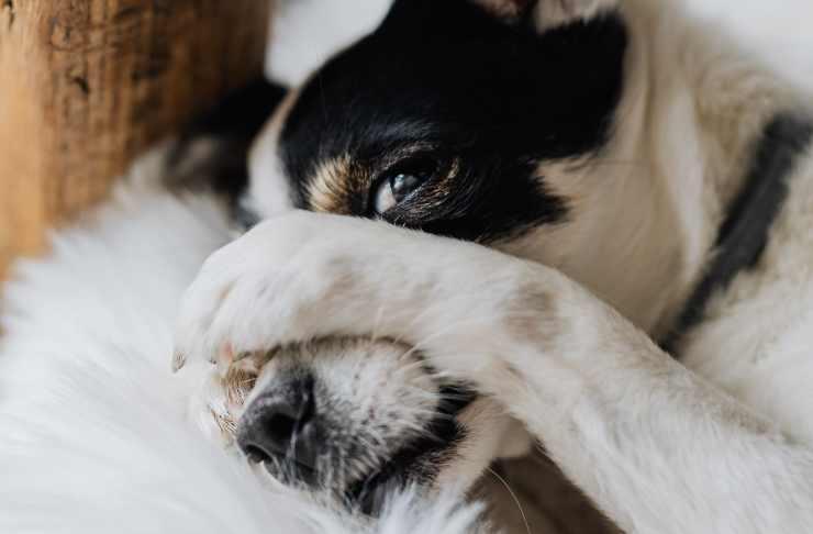 cane sta male, si isola