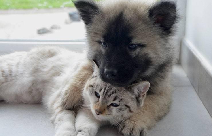 cane gatto abbraccio