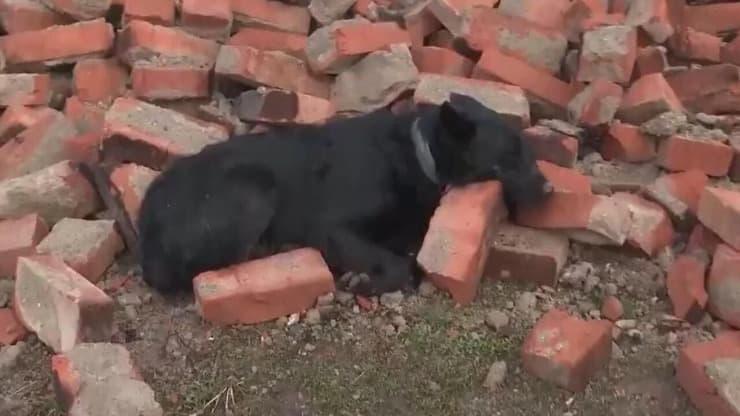 Terremoto Croazia, cane rimane a guardia della casa