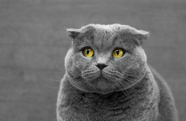 capire se il gatto ha la filaria