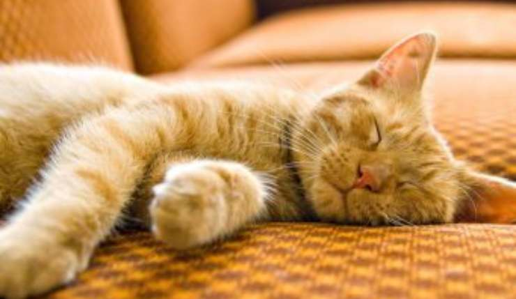 gatto carenza vitamina a