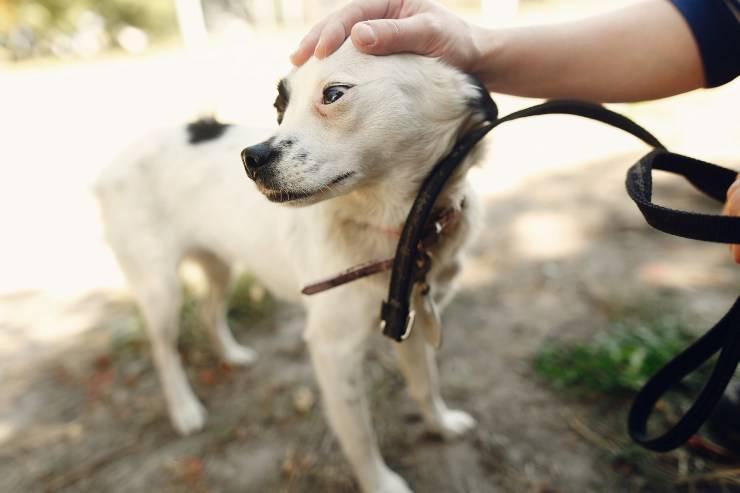 carezza sulla testa al cane