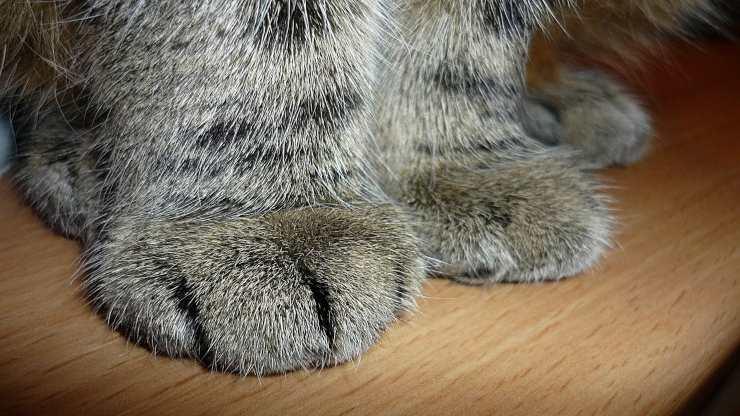 Il gatto si lima le unghie sui mobili