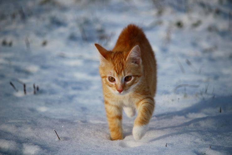 Il gatto ama la neve