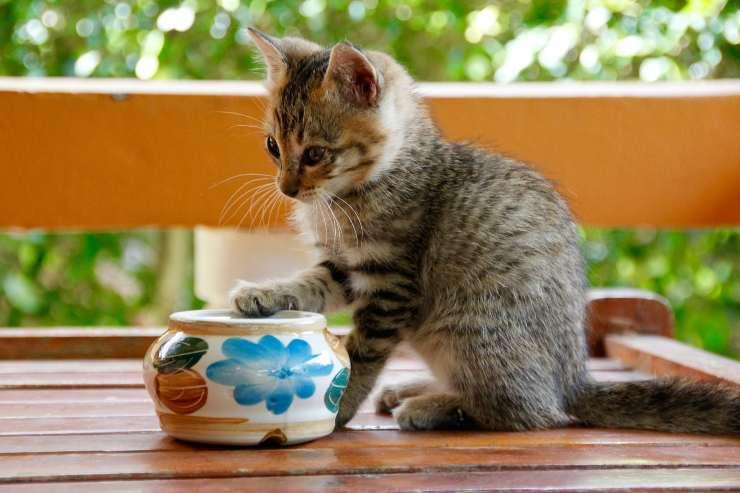 La frutta per il gatto