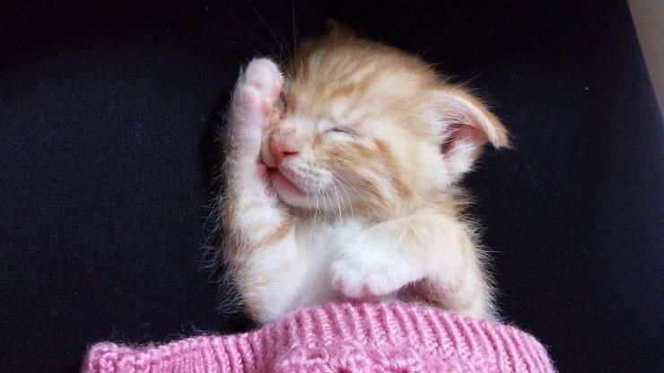 Come dormono i gattini
