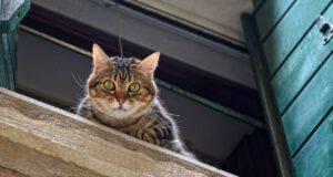 gatto finestra cadere sindrome grattacielo