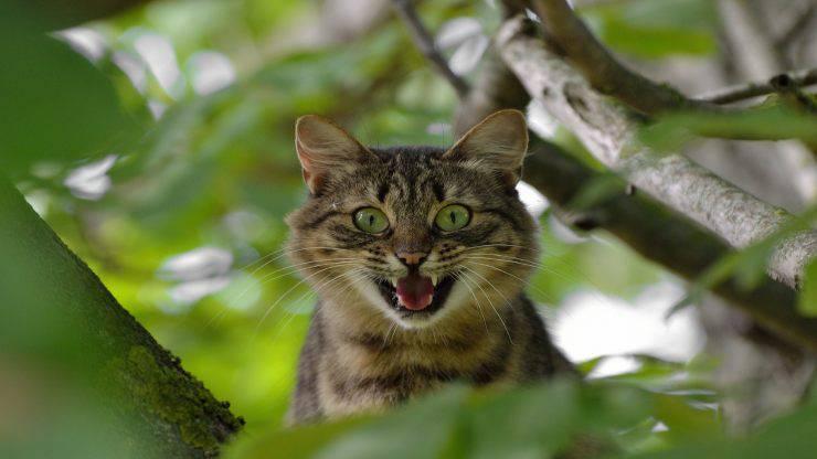 Il gatto scappa quando vede il padrone