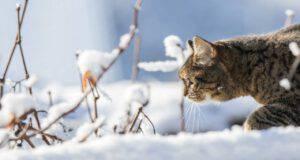 Gattino felice nella neve