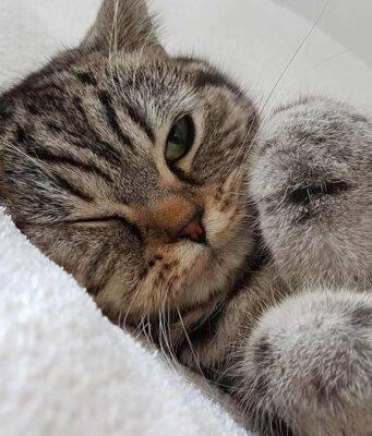Il gatto si gratta le orecchie