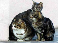 Gruppo di gatti (Foto Pixabay)
