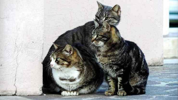 Gruppo di gatti attenti (Foto Pixabay)
