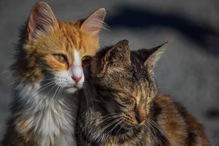 gatti randagi (foto pixabay)