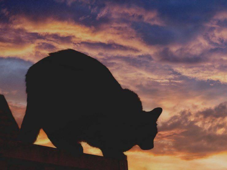 Gatto nero della Befana