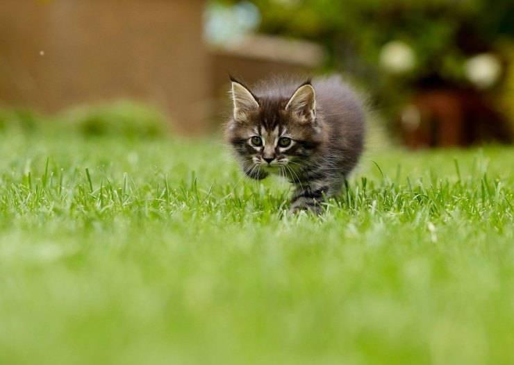 Micio nell'erba
