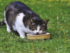 Gatto e il cavolo verza