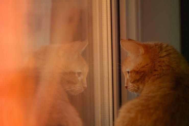 gatto gratta aria finestra vetro riflesso