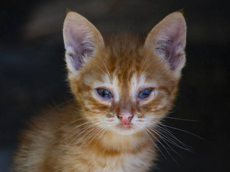 gatto sully abbandonato sei volte