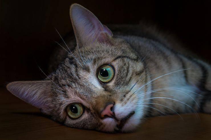 Il gatto e l'alimentazione