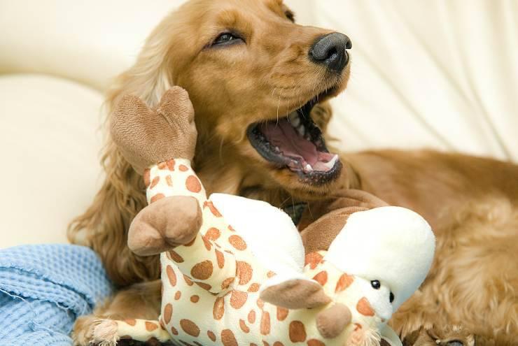 Il cane gioca