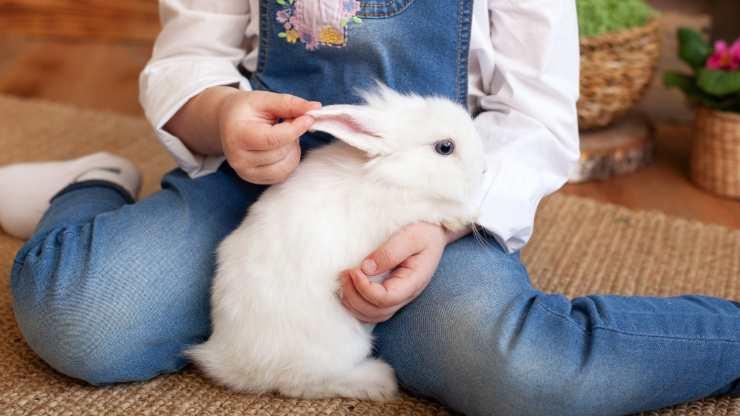 come insegnare al coniglio a venire quando lo chiami