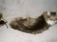 come insegnare al gatto a non salire sul divano