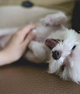 come rendere un cane felice