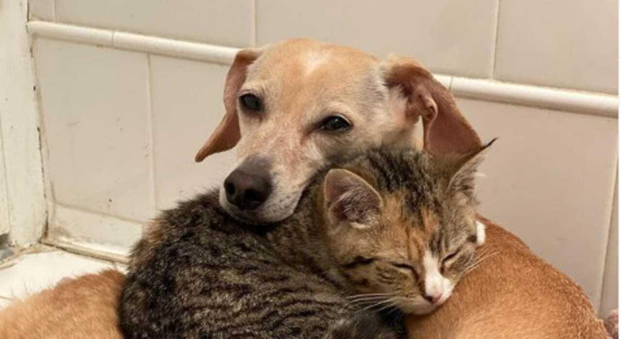 Kona, il cane di New York che si prende cura dei gattini orfani