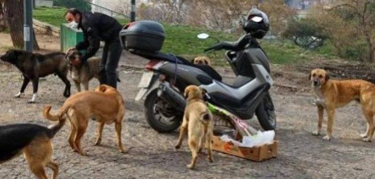 corriere sfama cani gatti randagi