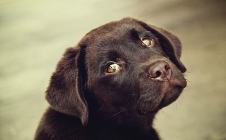 cucciolo cane