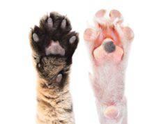 cuscinetti cane e gatto