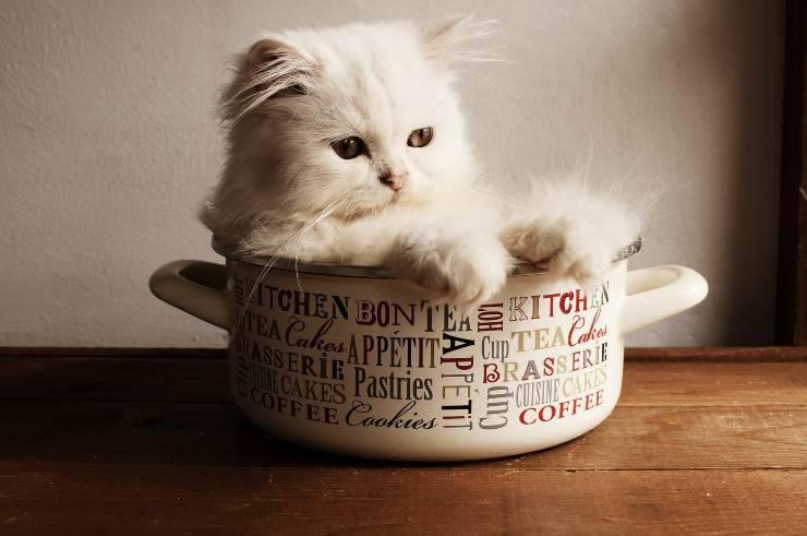 Il gatto e la sua dieta