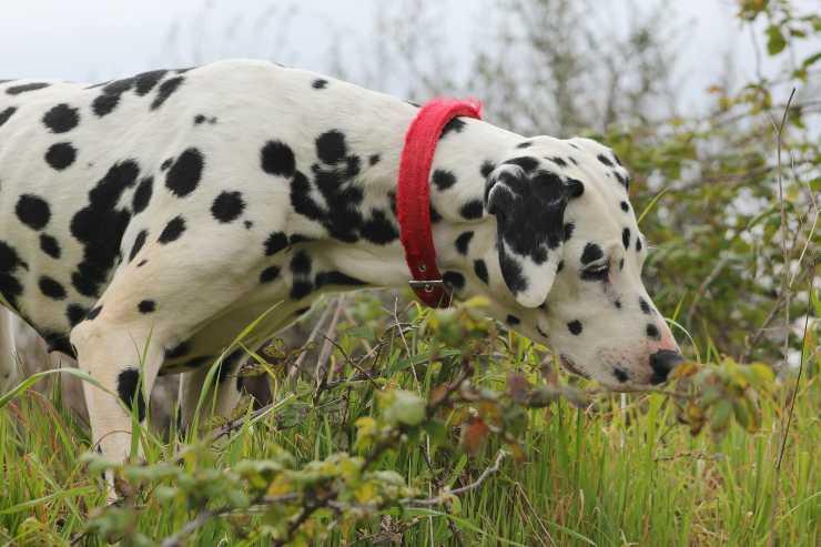 Le spezie adatte al cane