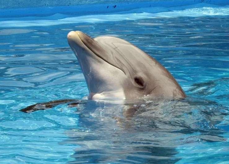 liberato delfino prigioniero parco nove anni