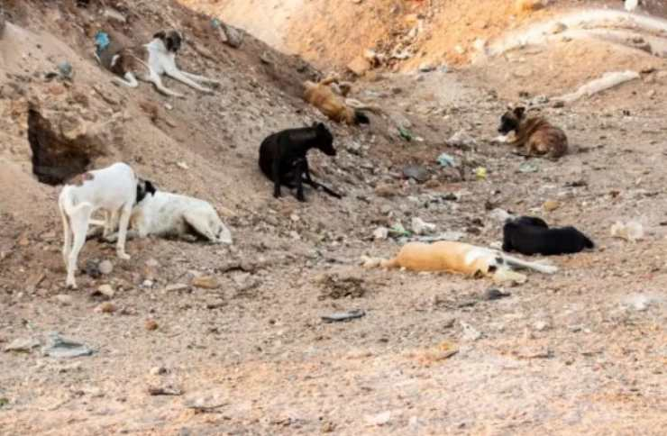 donna aiuta cagnolini discarica