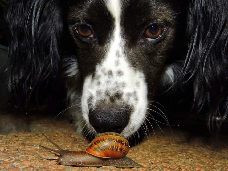 Il cane mangia le lumache