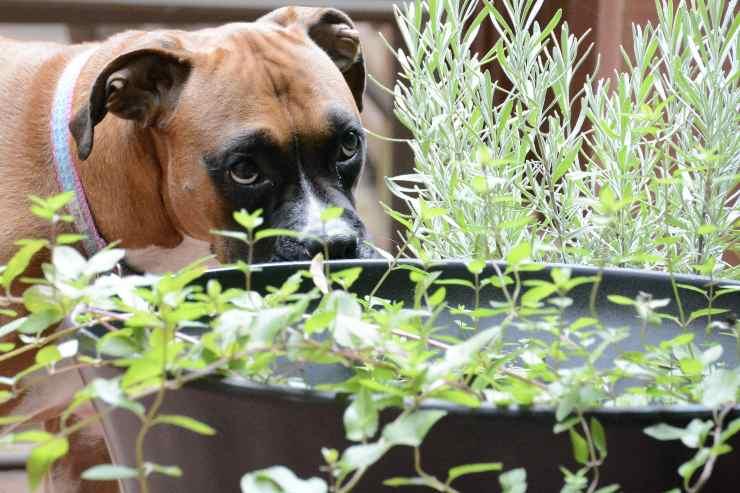 Le piante buone per il cane