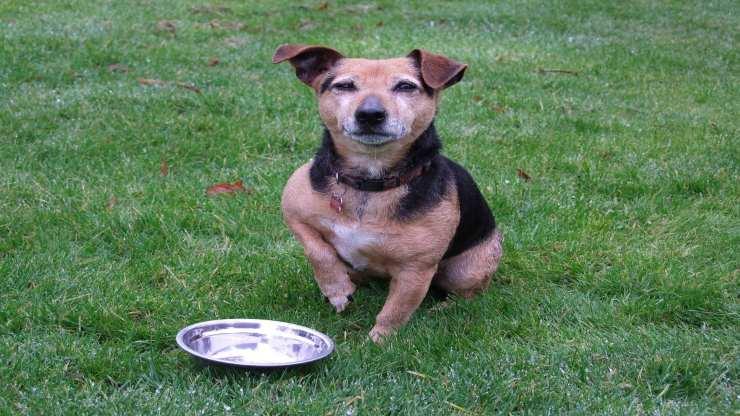 Leggere le etichette del cibo per cani